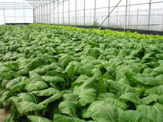 Basics of growing hydroponic plants hydroponics plant for Indoor gardening nutrients
