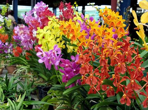 Hydroponics Orchids